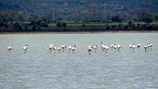 2021/04/canakkale-savaslarinin-yasandigi-yarimada-flamingolari-agirladi-a1e473f994ea-1.jpg