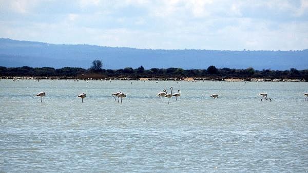 2021/04/canakkale-savaslarinin-yasandigi-yarimada-flamingolari-agirladi-a1e473f994ea-10.jpg