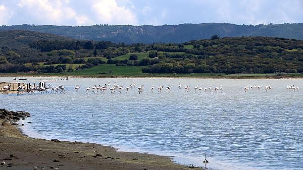 2021/04/canakkale-savaslarinin-yasandigi-yarimada-flamingolari-agirladi-a1e473f994ea-13.jpg