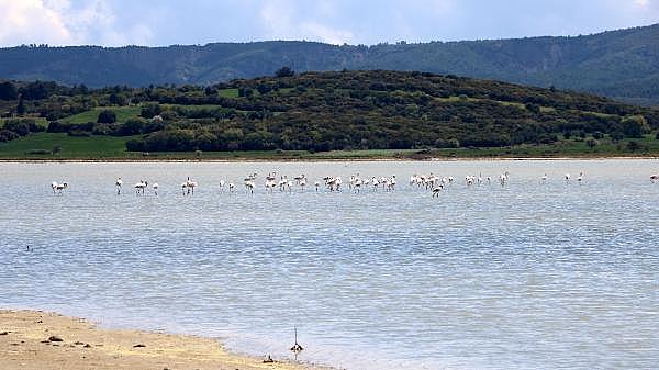 2021/04/canakkale-savaslarinin-yasandigi-yarimada-flamingolari-agirladi-a1e473f994ea-14.jpg