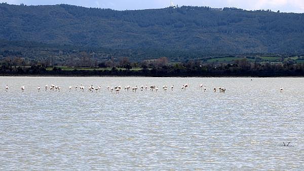 2021/04/canakkale-savaslarinin-yasandigi-yarimada-flamingolari-agirladi-a1e473f994ea-15.jpg