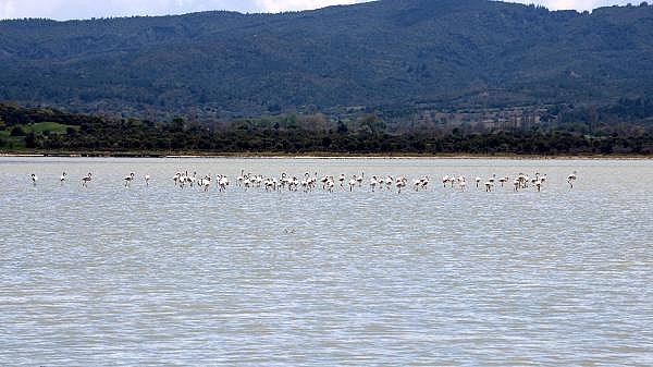 2021/04/canakkale-savaslarinin-yasandigi-yarimada-flamingolari-agirladi-a1e473f994ea-3.jpg