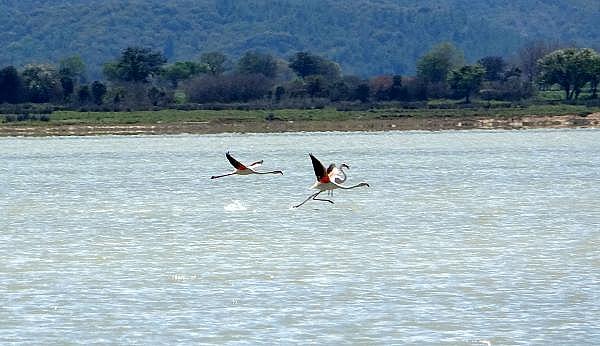 2021/04/canakkale-savaslarinin-yasandigi-yarimada-flamingolari-agirladi-a1e473f994ea-4.jpg