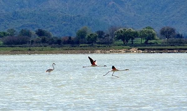 2021/04/canakkale-savaslarinin-yasandigi-yarimada-flamingolari-agirladi-a1e473f994ea-5.jpg