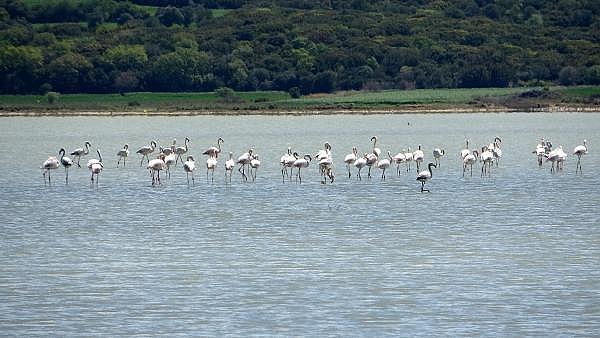 2021/04/canakkale-savaslarinin-yasandigi-yarimada-flamingolari-agirladi-a1e473f994ea-6.jpg
