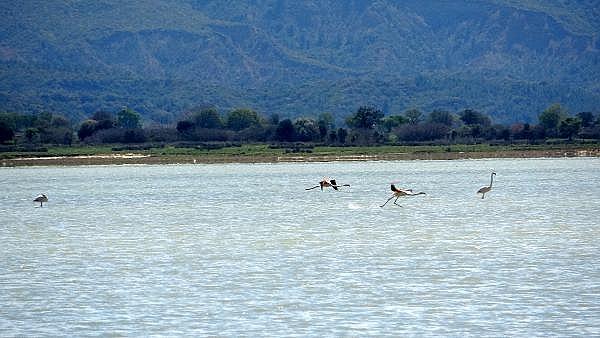 2021/04/canakkale-savaslarinin-yasandigi-yarimada-flamingolari-agirladi-a1e473f994ea-8.jpg