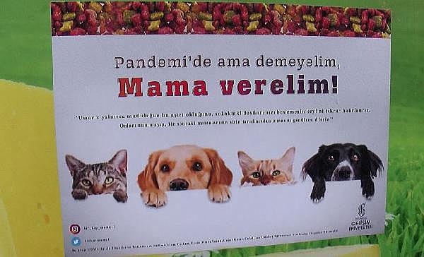 2021/06/sokak-hayvanlarini-besleme-orani-yuzde-47-dustu-ogrenciler-marketlere-mama-dagitti-bb125c84da1a-2.jpg