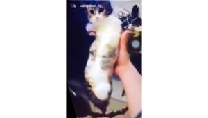Çanakkale'de Kediye bantlı işkence
