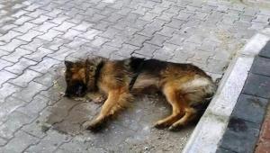 Çanakkale'de hayvan katliamı
