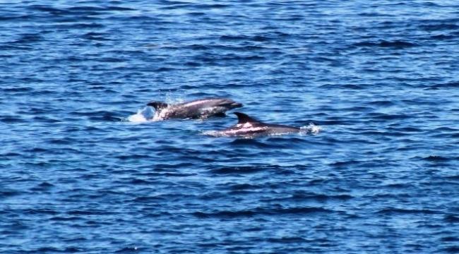 Yunus balıklarının gösterisi izleyenleri büyüledi.