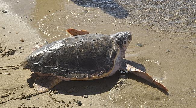 Kaplumbağa Dilek Evine Döndü