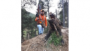 Avcı vurduğu domuzun saldırısına uğradı