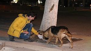 Gençler sokak hayvanlarına düzenli mama dağıtıyor