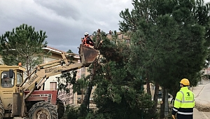 Çocuk parkı için ağaçları kestiler