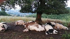 Çanakkale'de Ağaca yıldırım düştü, 10 inek telef oldu