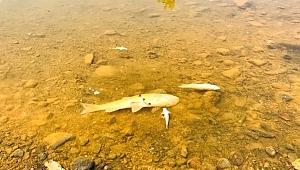 Çanakkale'de balık ölümleri