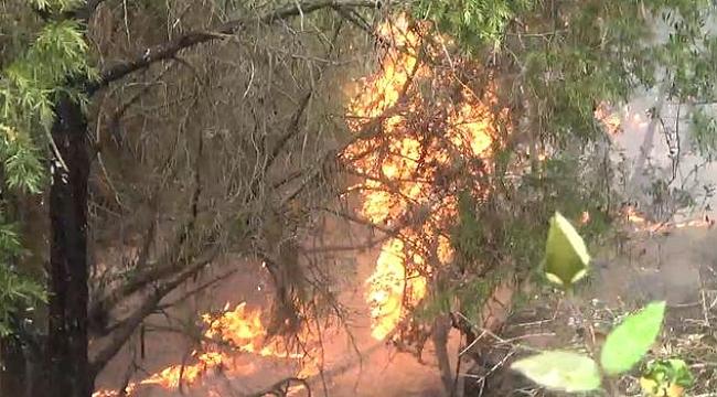 Çanakkale'de yıldırım düşen ormanlık alanda yangın