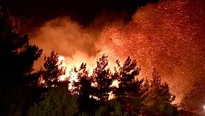 Tarihi Gelibolu Yarımadası'nda korkutan orman yangını