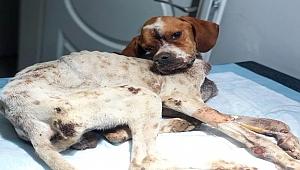 Hasta köpeği tedavi etmek için 450 kilometre yol gittiler