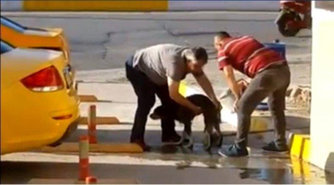 Taksiciler kirli sokak köpeğini sabunla yıkadı
