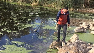 Karamenderes Nehri'ndeki balık ölümlerine ilişkin inceleme başlatıldı