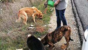 Soğuk havalarda yiyecek bulmakta güçlük çeken sokak köpeklerini besliyorlar