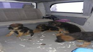 Edirne'de kaçak köpek yavrusu ve papağanlara el konuldu