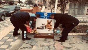 Ezine Belediyesi sokak hayvanları için proje hazırladı