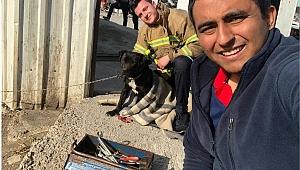Ağzına konserve kutusu sıkışan köpeği itfaiye ekibi kurtardı