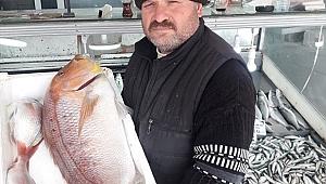 Gelibolulu balıkçı oltayla 8,5 kilogramlık sinarit avladı