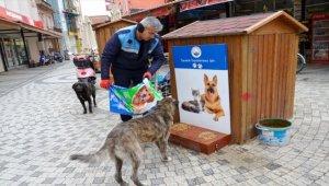 Ezine Belediyesinden sokak hayvanlarına mama desteği