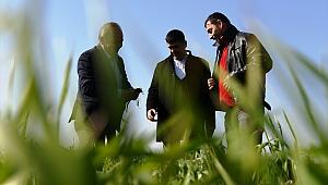 Lapsekili üreticiler buğdayda yüzde 30 fazla verim bekliyor