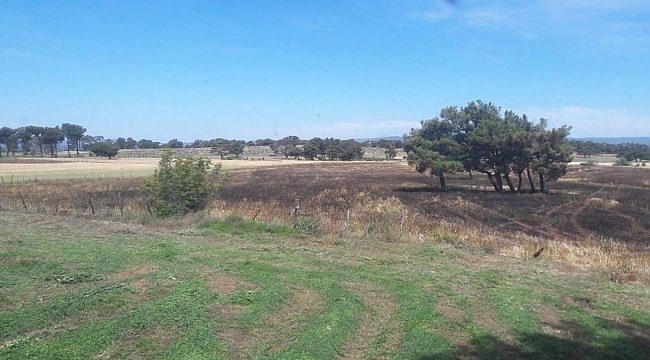 Bayramiç'te buğday tarlası yandı