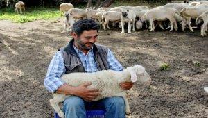 Doğa ve hayvan sevgisiyle 40 yıldır çobanlık yapıyor