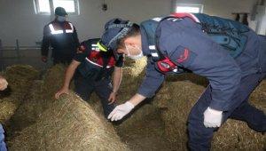 Havadan uçakla ağaçlık alana uyuşturucu atılmasıyla ilgili 9 zanlı yakalandı