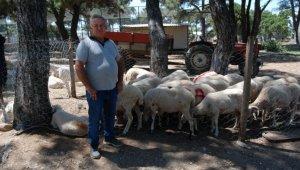Bayramiçli hayvan üreticileri arife gününden umutlu