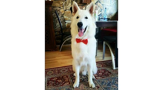 """Almanya'da bıraktığı köpeği """"Pascha""""nın öldüğünü tatile geldiği memleketinde öğrendi"""