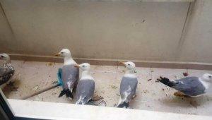 Çanakkale'de havalandırma boşluğuna düşen martıları itfaiye kurtardı