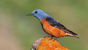 Kazdağları'nın kuş envanterine 5 yeni tür eklendi