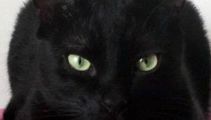 "Saraylardan sokaklara ""kara"" talihli kediler"