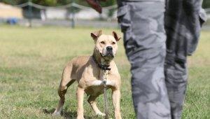 Sokak köpekleri, hassas burunlarını kayıpları bulmak için kullanacak